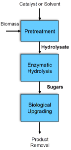 Biocatalyst preservation process