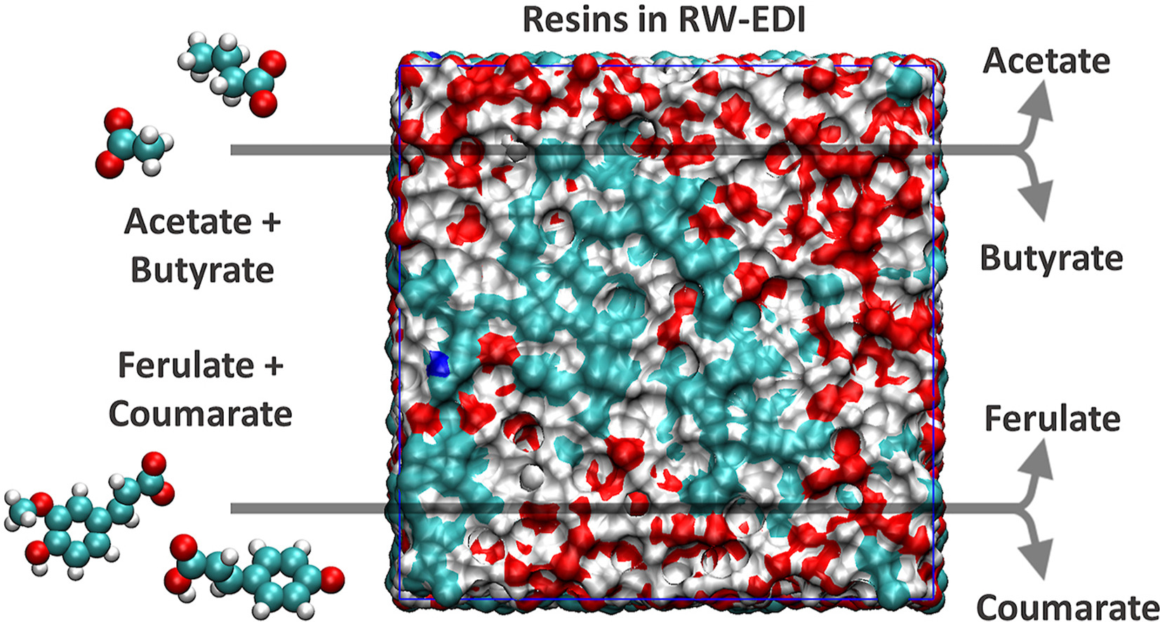 Atomic scale understanding of organic anion separations using ion-exchange resins