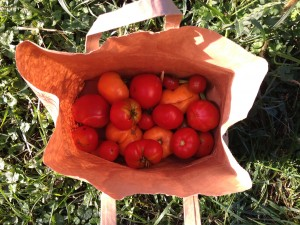 paper bag o' tomatoes